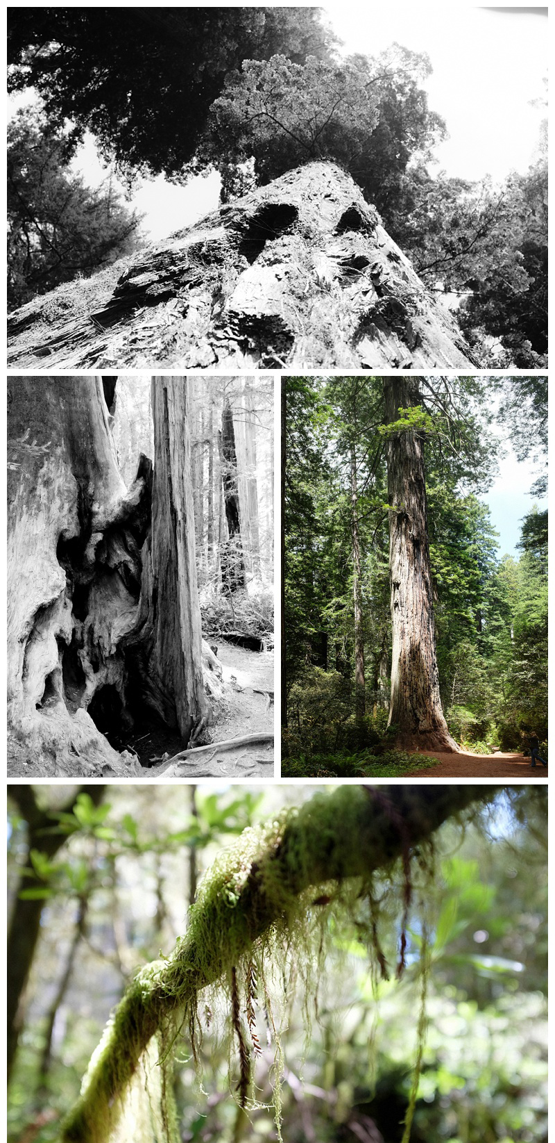 Yosemite_to_Redwoods_0010